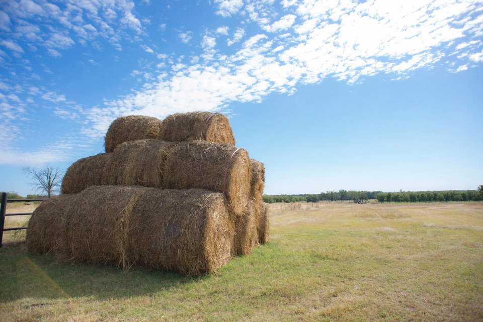 Photo -  Round bales of hay sit stacked waiting for latter use or transport. [Photo courtesy of Oklahoma State University]
