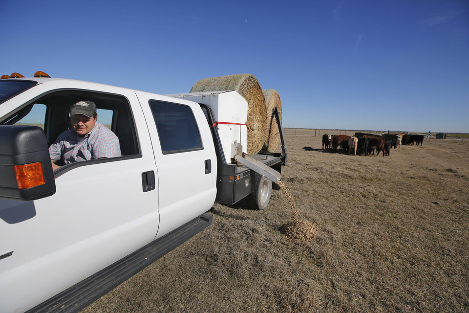 Photo - Eric Bilderback feeds his cattle Tuesday at his Canadian County ranch. Bilderback is one of many Oklahoma farmers who filed for subsidies under the federal Livestock Forage Disaster Program.   PHOTO BY STEVE GOOCH, THE OKLAHOMAN  Steve Gooch