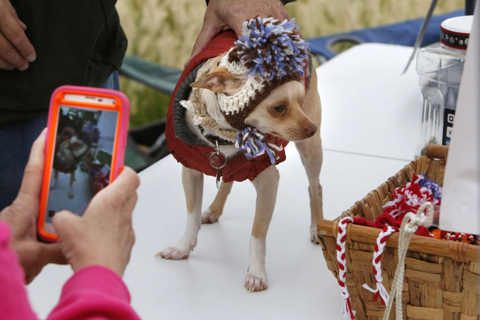 "Photo - Chihuahua ""Snowy"" has its photo taken during a dog adoption event at the Myriad Gardens great lawn in Oklahoma City, OK, Saturday, September 13, 2014,  Photo by Paul Hellstern, The Oklahoman"
