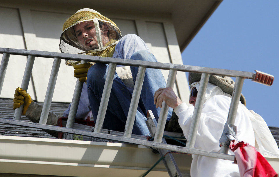 Wendell Scott, right, helps Joshua Lutes with a ladder as they go after a beehive on the roof of an Oklahoma City building. Photos by NATE BILLINGS, THE OKLAHOMAN