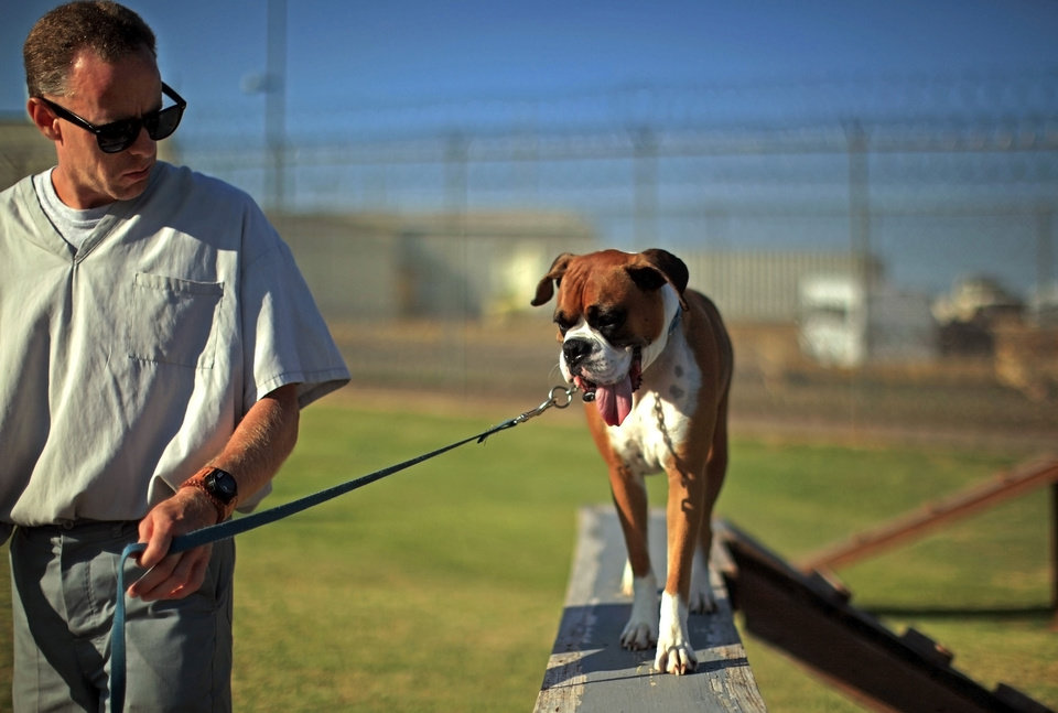 Photo - PRISON INMATES / DOGS: Inmate Kenneth Sewell takes Marley on an obstacle course at the Lexington Assessment and Reception Center, Friday, July 11,  2013, in Lexington, Okla. Photo by Sarah Phipps, The Oklahoman