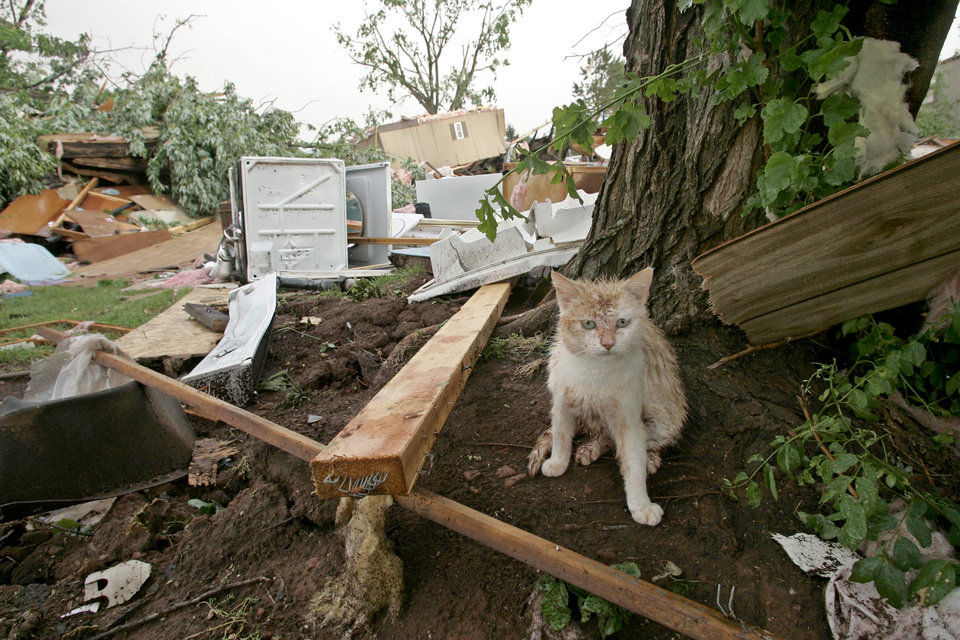 Photo - Above: A kitten takes cover next to a tree after a tornado in Slaughterville.  AP Photo