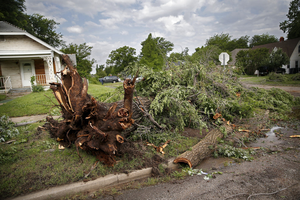 Photo - Tree damage is pictured near 21st and McKinley after an apparent tornado moved through the area in Oklahoma City, Sunday, May 26, 2019.  [Sarah Phipps/The Oklahoman]