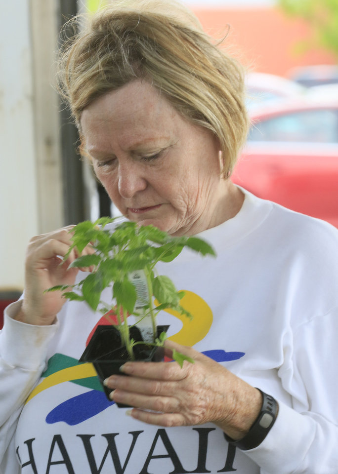 Photo -  Kathy Williams looks over a tomato plant during the opening day of the Edmond Farmers Market at Festival Market Place. [PHOTO BY PAUL HELLSTERN, THE OKLAHOMAN]