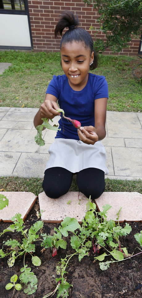 Photo -  Jazzlyn Fresquez, 11, harvests radishes in the garden at Tulakes Elementary School. Photo by Paul B. Southerland, The Oklahoman   PAUL B. SOUTHERLAND -  PAUL B. SOUTHERLAND