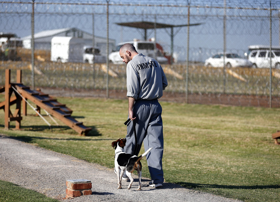 Photo - Inmate Michael Williams walks Santana at the Lexington Assessment and Reception Center, Friday, July 11,  2013, in Lexington, Okla. Photo by Sarah Phipps, The Oklahoman