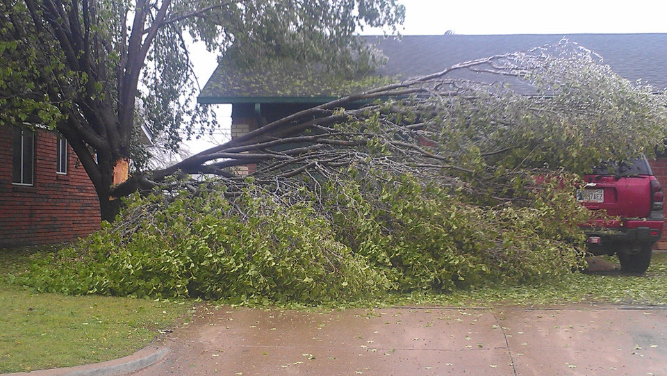 TREE DOWN SOUTH OKC