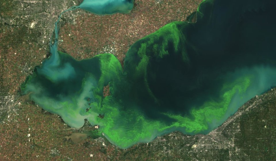 Photo - This satellite image provided by NOAA shows the algae bloom on Lake Erie in 2011 which according to NOAA was the worst in decades. The algae growth is fed by phosphorus mainly from farm fertilizer runoff and sewage treatment plants, leaving behind toxins that have contributed to oxygen-deprived dead zones where fish can't survive. The toxins can kill animals and sicken humans. Ohio's fourth-largest city, Toledo, told residents late Saturday Aug. 2, 2014 not to drink from its water supply that was fouled by toxins possibly from algae on Lake Erie. (AP Photo/NOAA)