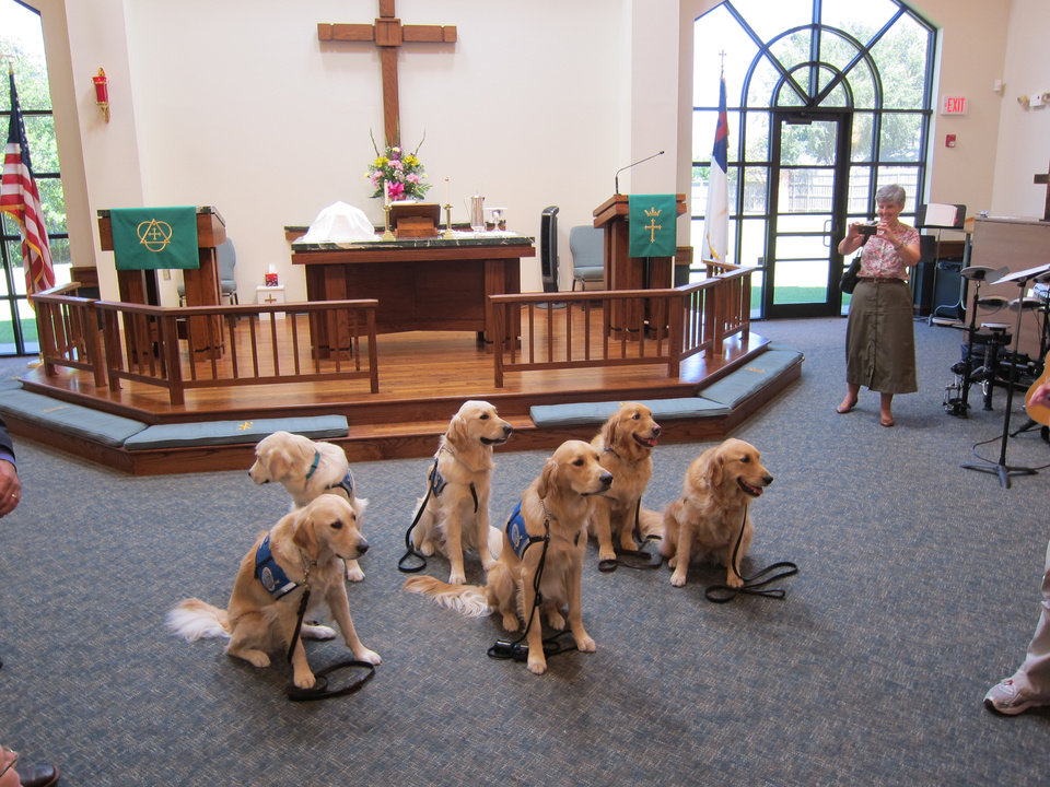 Photo -  All of the Lutheran Church Charities Comfort Dogs attending the recent Passing of the Leash ceremony for Rufus Comfort Dog sit patiently while pictures are taken of them at St. Mark Lutheran Church, 1501 N Bryant in Edmond. Rufus is in the front center. Photo by Carla Hinton, The Oklahoman