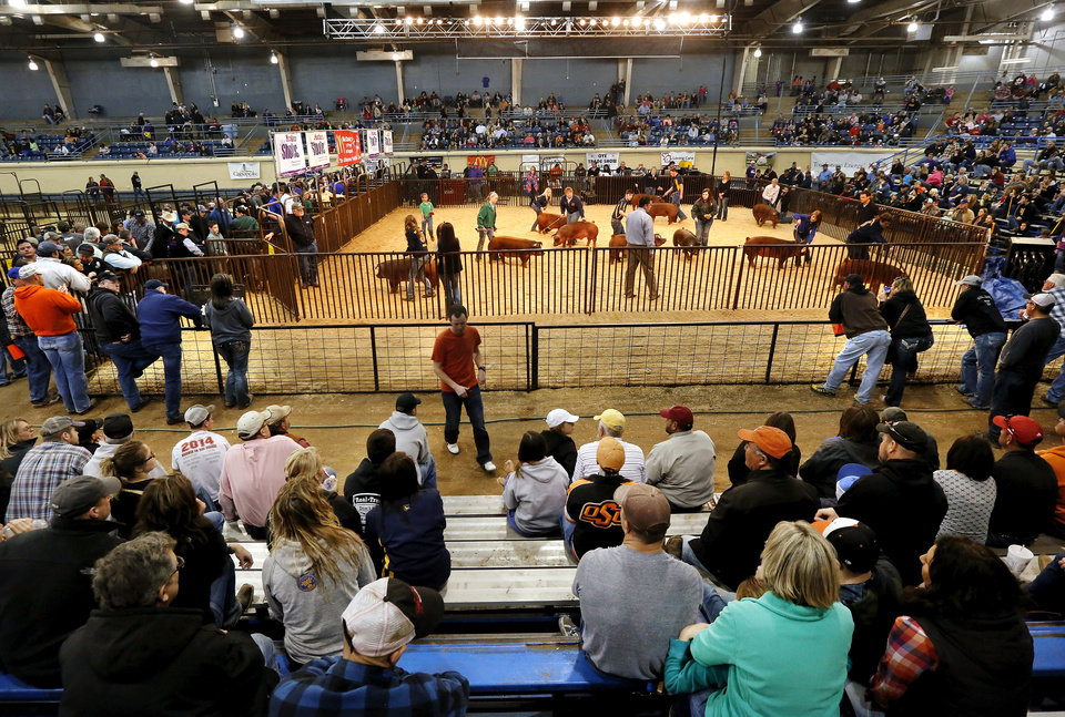 Photo -  Entrants walk their hogs around the ring Tuesday as judges stand in the middle to view them at the Oklahoma Youth Expo at State Fair Park. Photos by Jim Beckel, The Oklahoman   Jim Beckel -