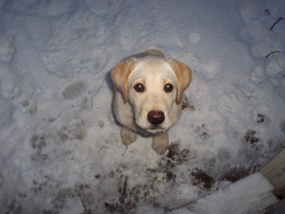 My dog Rocky playing in the snow. Community Photo By: Dylan Marshall Submitted By: Dylan, Choctaw