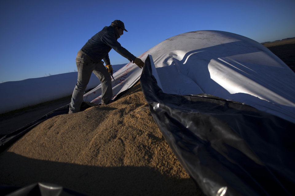 ADVANCE FOR MONDAY, DEC. 3. - In this July 14, 2012 photo, a worker opens a portable silo bag to load into a truck to be transported for sale at a farm near Pergamino, Argentina. China is the leading buyer of Argentine soybeans, with most of the country's fertile land nowadays covered with the crop, its principal export. As Chinese ate more pork, fried chicken and hamburgers, increasing the demand for soybeans to make cooking oil and feed for pigs and cows, cattle ranchers in Latin America turned grazing land into fields of soy, a crop few in their region consume. (AP Photo/Natacha Pisarenko)