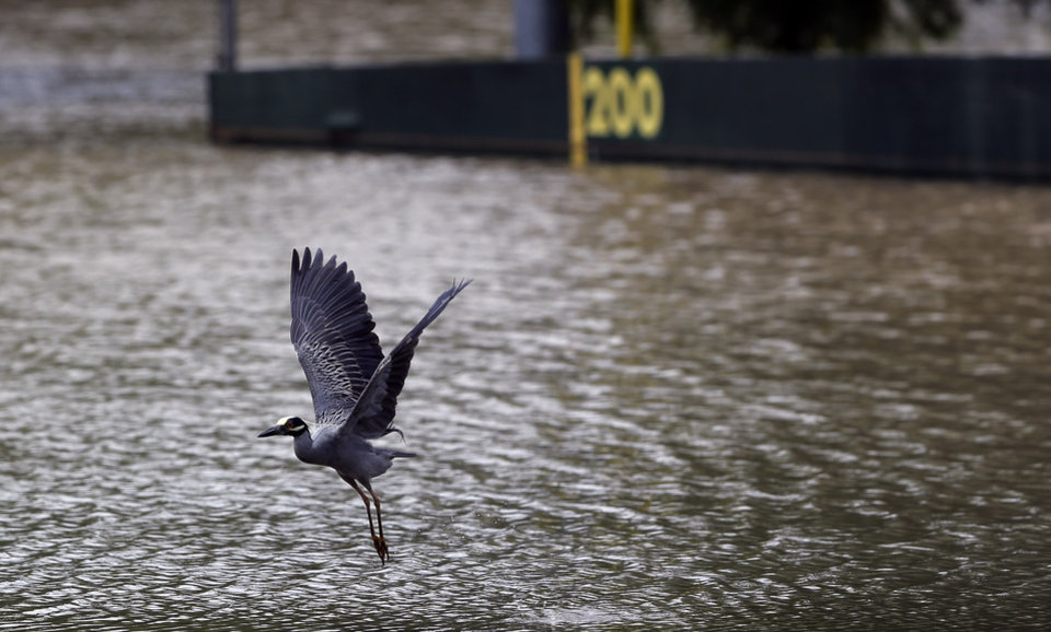 Photo - A heron takes flight over a flooded baseball field, Sunday, May 26, 2013, in San Antonio. Heavy rains and flooding are being blamed for at least two deaths in San Antonio. (AP Photo/Eric Gay)