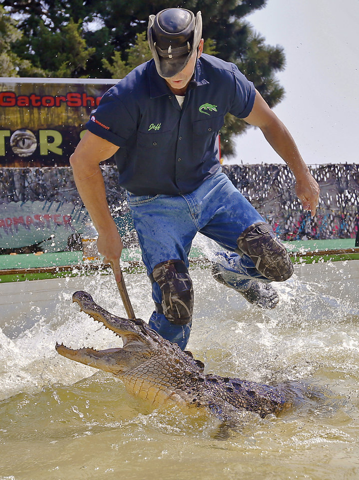 "Photo - Alligator handler Jeff Quattrocchi comes too close to the male gator as it snaps at him during ""The Swampmaster"" gator show during the 2013 Oklahoma State Fair on Monday, Sep. 16, 2013. Photo by Chris Landsberger, The Oklahoman"