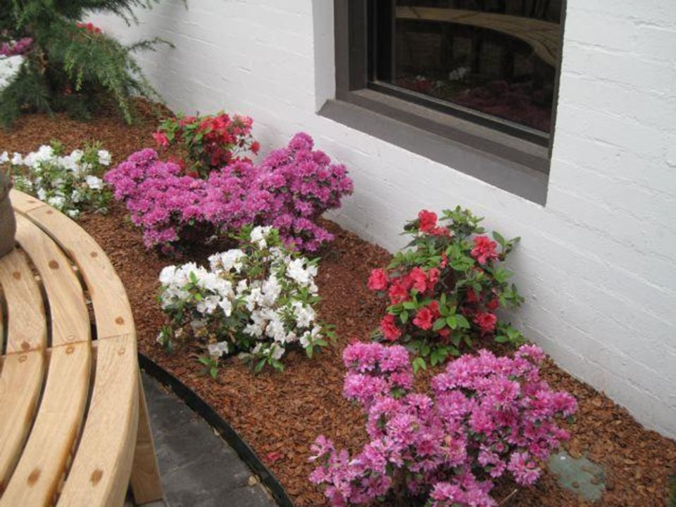 GOLF SHOP GRAND OPENING....Azaleas were already blooming in the  flower beds around the golf club entrance. (Photo by Helen Ford Wallace).