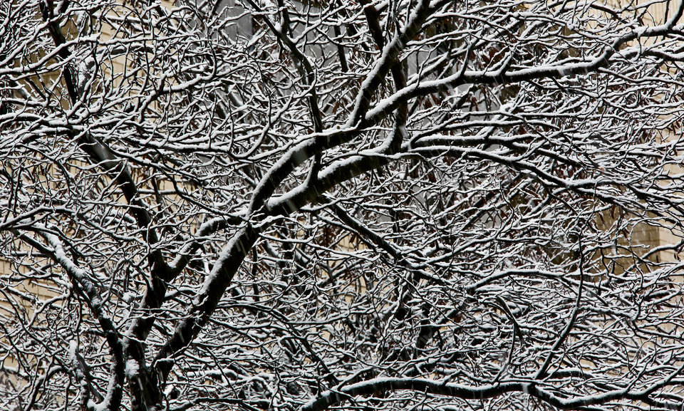 Snowfall collects on the branches of a tree on Tuesday, Feb.12, 2013, in Oklahoma City, Okla. Photo by Chris Landsberger, The Oklahoman