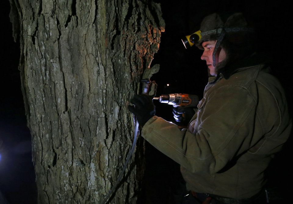 Photo - In this March 9, 2014 photo, Turtle Lane Maple farmer Paul Boulanger taps a maple tree by headlamp Sunday evening in North Andover, Mass. Maple syrup season is finally under way in Massachusetts after getting off to a slow start because of unusually cold weather. (AP Photo/Elise Amendola)