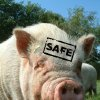 Photo - SAFE PIG, SAFE HOG          ORG XMIT: 0904272228083344