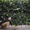 This feb. 28, 2013 photo shows David Elliott preparing a wall made of kale in the Pennsylvania Horticultural Society\'s installation for the annual Philadelphia Flower Show at the Pennsylvania Convention Center in Philadelphia. More than 270,000 people are expected to converge on the Pennsylvania Convention Center for the event, which runs through March 10. Billed as the world\'s largest indoor flower show, it\'s also one of the oldest, dating back to 1829. (AP Photo/Matt Rourke)