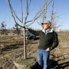 Monty Marcum, Marcum\'s Nursery & Tree Farm, with a Chinese Pistache being dug up for sale at Marcum\'s Nursery & Tree Farm in Goldsby Monday, Jan. 14, 2008. BY PAUL B. SOUTHERLAND, THE OKLAHOMAN