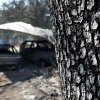 Ashen white bark of a tree on property at 6409 NE 71 with two cars underneath a covering. The cars and the mobile home here were destroyed when wildfires ravaged land and property that stretched from NE 50 on the south to Hefner Road on the north. The fire extended from Sooner Road to Midwest Blvd. Photo taken Wednesday, Aug. 31, 2011. Photo by Jim Beckel, The Oklahoman