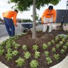 Photo -  Edmond has hired contractors to plant flowers all over downtown the color of the U.S. Senior Open Championship that starts Monday. PHOTO BY DAVID MCDANIEL, THE OKLAHOMAN   David McDaniel -  The Oklahoman