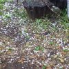Hail just outside of Shawnee 05/12/11 @ 17:20 Photos by Linda Oas