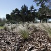 Native grasses and shrubbery are a new focus at the arboretum at Will Rogers Gardens. Oklahoma City celebrates Arbor Week next week. PAUL HELLSTERN - The Oklahoman