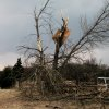 Tree damage and debris in Edmond. PHOTO BY JOHN A. WILLIAMS, THE OKLAHOMAN