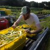 Photo - In this Tuesday, Aug. 5, 2014 photo, farmer Ben Torpey, of Greene, R.I., loads a crate of zephyr squash into a truck at Scratch Farm in Cranston, R.I. Across New England, the number of farms has grown by 5 percent since 2007, contrary to the national trend. (AP Photo/Steven Senne)