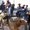 Cody Dollins of Waco, TX, is unable to make the eight-second ride atop this bull during the morning go-round at the IFYR rodeo on Thursday, July 11, 2013. July 10, 2013. Photo by Jim Beckel, The Oklahoman.