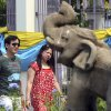 """Photo - In this March 30, 2014 photo, a couple of Chinese tourists walks past a stone carving elephant as they enter for a tour at Chiang Mai University in Chiang Mai province, northern Thailand. The bucolic, once laid-back campus of one of Thailand's top universities is under a security clampdown. Not against a terrorist threat, but against Chinese tourists. Thousands have clambered aboard student buses at the university, made a mess in cafeterias and sneaked into classes to attend lectures. Someone even pitched a tent by a picturesque lake. The reason: """"Lost in Thailand,"""" 2012 slapstick comedy partly shot on campus that is China's highest-grossing homegrown movie ever. (AP Photo/Apichart Weerawong)"""