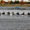 The Northwest Classen High School rowing team came in second in their 500 meter heat race with a time of 2:17 during the OKC Riversport Youth League Championship on the Oklahoma River in downtown Oklahoma City, Wednesday, November 16, 2011. PHOTO BY HUGH SCOTT, FOR THE OKLAHOMAN ORG XMIT: KOD