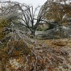 WINTER / COLD / WEATHER: Ice storm aftermath and damage in Midwest City neighborhoods. This is in Windsong housing addition, near SE 15 and Westminster Tuesday morning, Dec. 11, 2007. Every tree in the yard of this home on Honeysuckle Lane received heavy damage from weight of the ice. 2007. By Jim Beckel, The Oklahoman. ORG XMIT: KOD