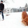 Calvin Brink clears snow from the sidewalk on St. Andrews Street in Rapid City, S.D. on Tuesday afternoon, April 9, 2013 while his dog, Cinder, rolls in the snow. An early spring storm walloped South Dakota early Tuesday, downing large tree limbs and cutting power to thousands of homes and businesses. (AP Photo/Rapid City Journal, Chris Huber)