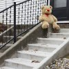 Photo -   A lone teddy bear sits on the steps of the home where three children, their uncle, and their grandmother were found dead inside a garage Monday in what appears to be a murder-suicide amid a custody dispute in Toledo, Ohio, Tuesday, Nov. 13, 2012. (AP Photo/Rick Osentoski)