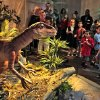 Visitors get a look at a Deinonychus during a test tour of a new exhibit, Red Dirt Dinosaurs, at Science Museum Oklahoma, Thursday, October 10, 2013. Photo by David McDaniel, The Oklahoman