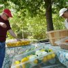 Photo - Gary Phillips shops for tomatoes at Ruth Kammerlocher's stand at a farmers  market Sunday in Norman.