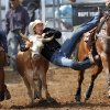 Jace Lane of Morse, TX, lands atop this steer during the steer wrestling event during the morning go-round at the IFYR rodeo on Thursday, July 11, 2013. July 10, 2013. Photo by Jim Beckel, The Oklahoman.