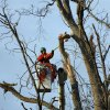 A tree service employee trims the broken branches of this tree in McNeill, Miss., Wednesday, Dec. 26, 2012. More than 25 people were injured and at least 70 homes were damaged in Mississippi by the severe storms that pushed across the South on Christmas Day, authorities said Wednesday. Hundreds of trees were damaged or destroyed, many with broken branches overhanging homes or property. (AP Photo/Rogelio V. Solis)