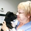 Photo - Ginny Shertzer, manager of VCA Woodland South Animal Hospital in Tulsa, adopted 9-week-old boxer mix Sidney after the injured animal was found with a bloody rope tied around his neck on a road in Jenks.  TULSA WORLD