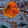 Frozen leaf in Norman ice storm. Community Photo By: Robert Ferrier Submitted By: Robert, Norman