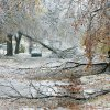 WINTER / COLD / WEATHER / ICE STORM / DAMAGE / AFTERMATH: Trees cover the streets at 18th and Walker in Heritage Hills in Oklahoma City , Okla. Dec. 10, 2007. BY STEVE GOOCH, THE OKLAHOMA. ORG XMIT: KOD