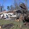 Large trees are toppled in the yard of a home that was damaged by severe weather that struck the prior evening, on Jefferson Avenue in Century, Fla., Tuesday, Feb. 16, 2016. (AP Photo/Michael Snyder)