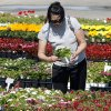 Pam Southwell from Norman examines flowers at Sooner Bloomers on Main Street in Norman, Okla. on Wednesday, April 22, 2009. Photo by Steve Sisney, The Oklahoman