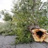 A tree downed during an early morning thunderstorm blocking the roadway in the 3600 block of Markwell Ave. in Bethany Wednesday, Sept. 5, 2012. Photo by Paul B. Southerland, The Oklahoman