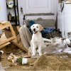 """Photo - Marley takes a breather after demolishing the Grogans' garage in """"Marley & Me.""""  20th Century Fox Photo"""