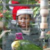 New recruit Pfc Ashly Pierre take a photo of a parrot in the Crystal Bridge at the Myriad Gardens during Soldiers Day Out, Friday, December 21, 2012. Edmond/North OKC Blue Star Mothers will be taking the soldiers who can\'t go home for Christmas around the metro for a day of fun. Photo By David McDaniel/The Oklahoman