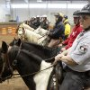 Assistant Team Leader Robin Davidson prepares for an exercise during an annual training event to qualify deputies and horses for the Oklahoma County Sheriff\'s Office Mounted Patrol Division at State Fair Park in Oklahoma City, OK, Saturday, March 5, 2011. By Paul Hellstern, The Oklahoman ORG XMIT: KOD