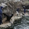 New York Aquarium employees, including Lora Murphy, left, feed and train sea lions as snow falls at the aquarium in New York, Monday, March 25, 2013. A wide-ranging storm is hitting the East Coast after blanketing the Midwest and burying thoughts of springtime weather under a blanket of heavy wet snow and slush, though less snow was predicted to fall as the storm moves eastward. (AP Photo/Seth Wenig)